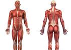 نقشه عضلات بدن و سایر حرکت های بدنسازی