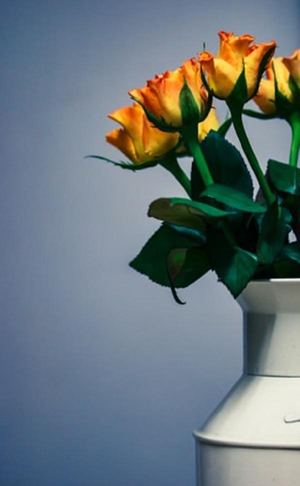 عکسهای گل رز زرد در گلدان