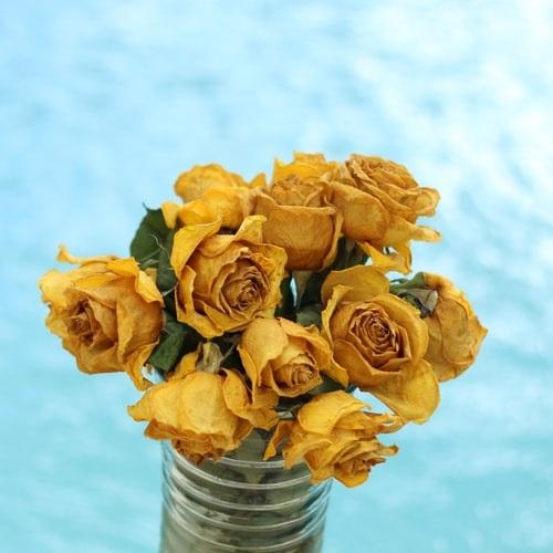 عکسهای زیبای گل رز زرد خشک شده