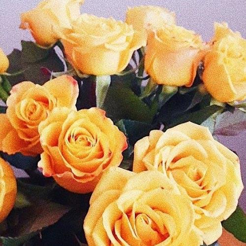عکس زیبا از گل رز زرد
