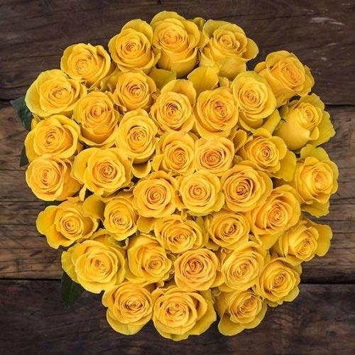 تصاویر دسته گل رز زرد