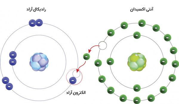 رادیکال آزاد و آنتی اکسیدان