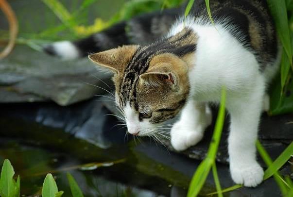 ترس گربه از آب