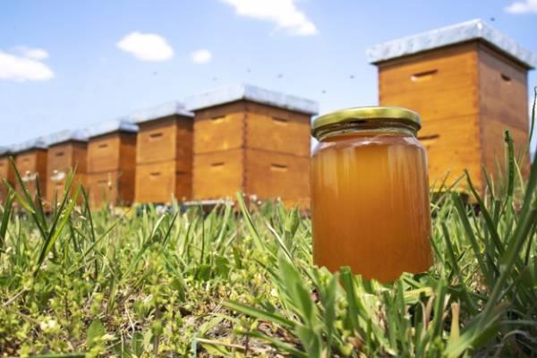 درست شدن عسل