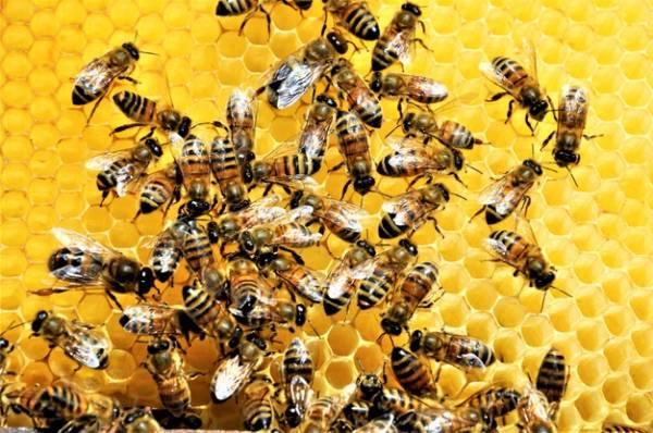 طرز تهیه عسل