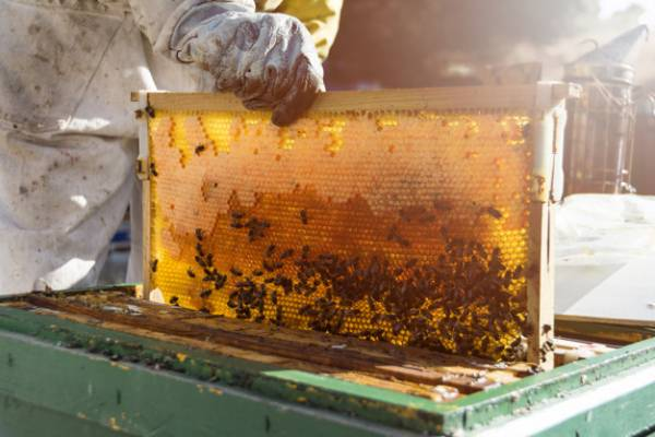 عسل درست کردن زنبور