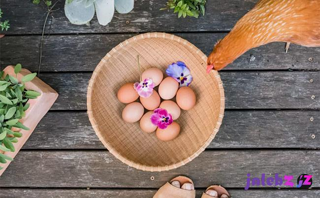 شستن تخم مرغ با آب و مواد شوینده؛ آری یا خیر؟