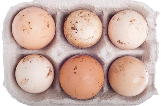 تخم مرغ شسته نشده با کوتیکول سالم تر است